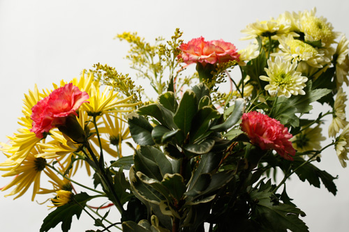 Photo of flowers, part of the sequence of images used to create the slit scan photo